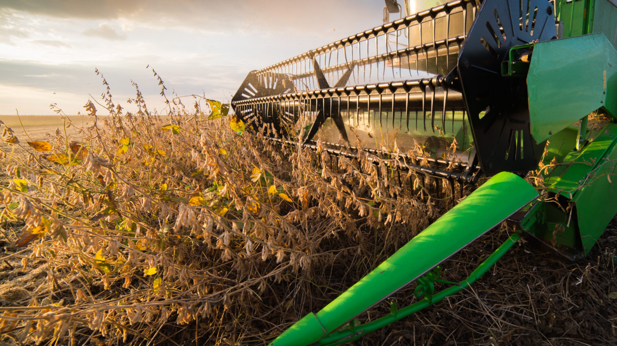 Soybean Harvest Moving at Rapid Pace