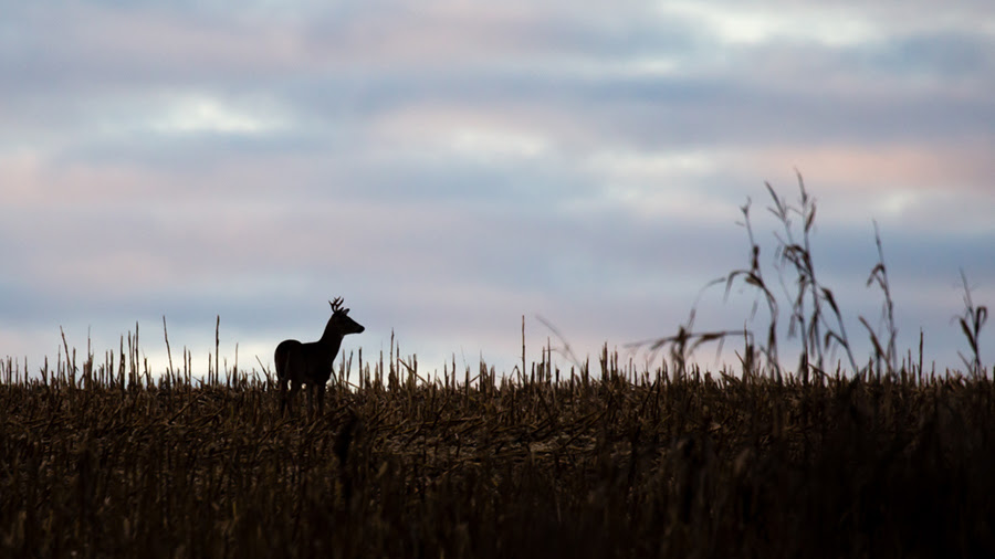 What to know before processing that deer at home