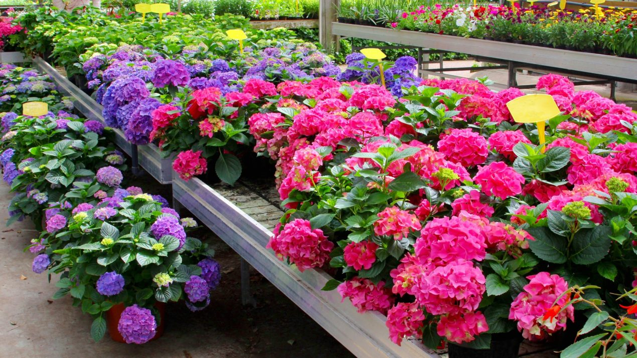 Wisconsin's Floriculture Industry Worth $231 Million