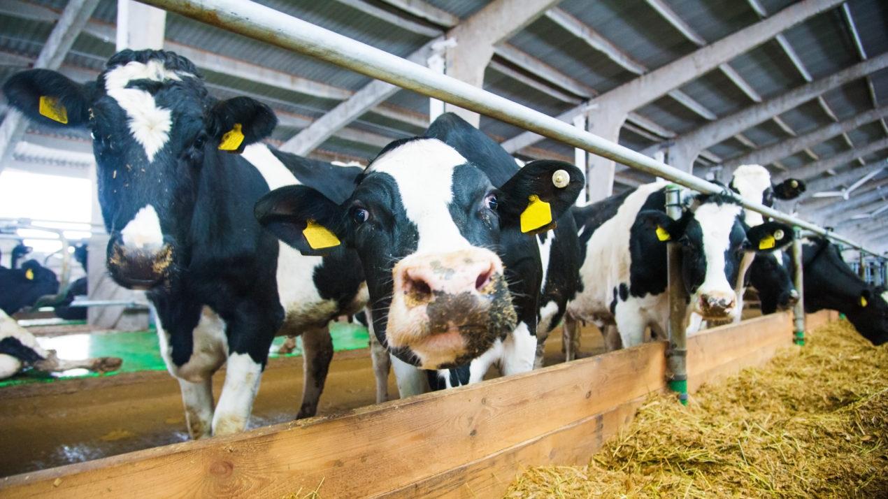 Partnerships Move Dairy Community Forward on Environmental Goals