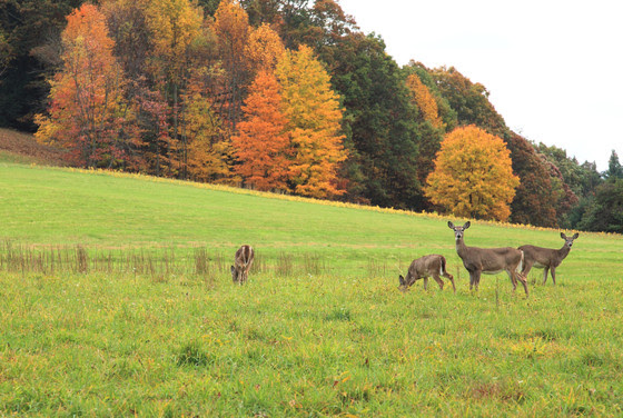 Help Shape Deer Management In Wisconsin