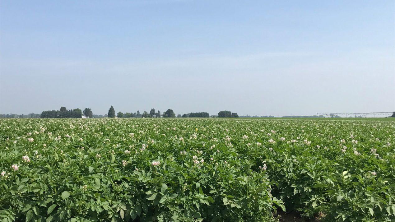 Antigo Flats – Commitment To Soil