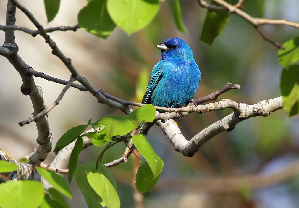 Become A Birder In May