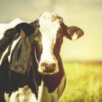 Dairy Expo Releases 2022 Schedule