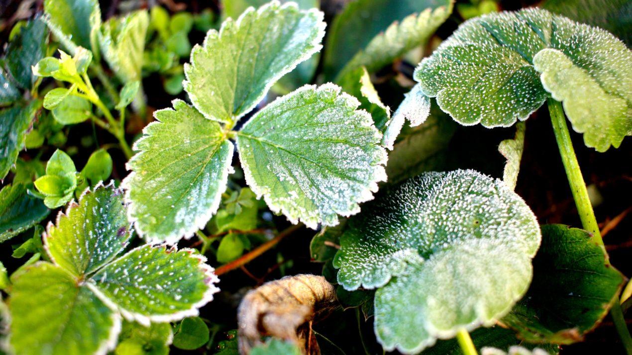 Brr…Cold For Sensitive Plants