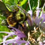 This Is Pollinator Week