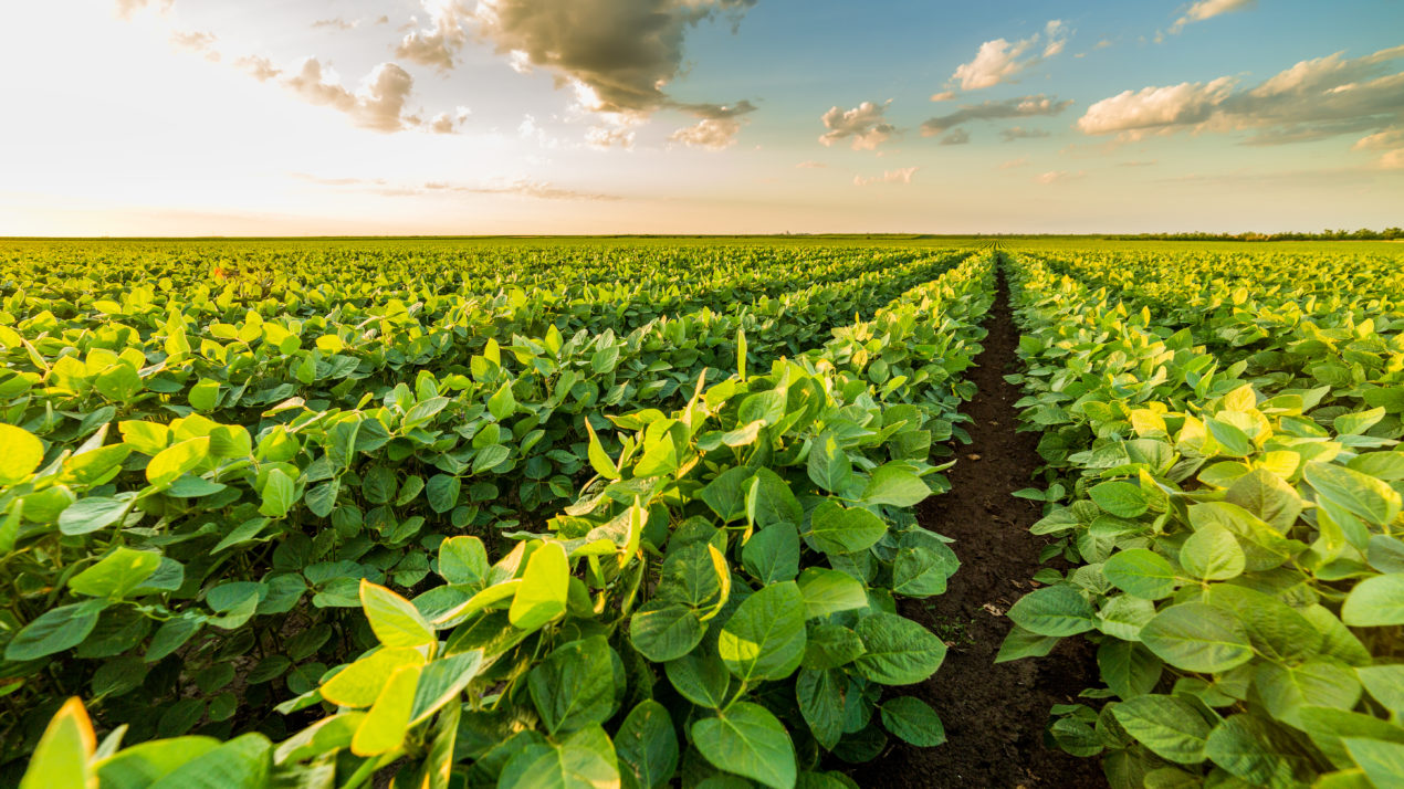 Crops Slowly Respond To Weather Change
