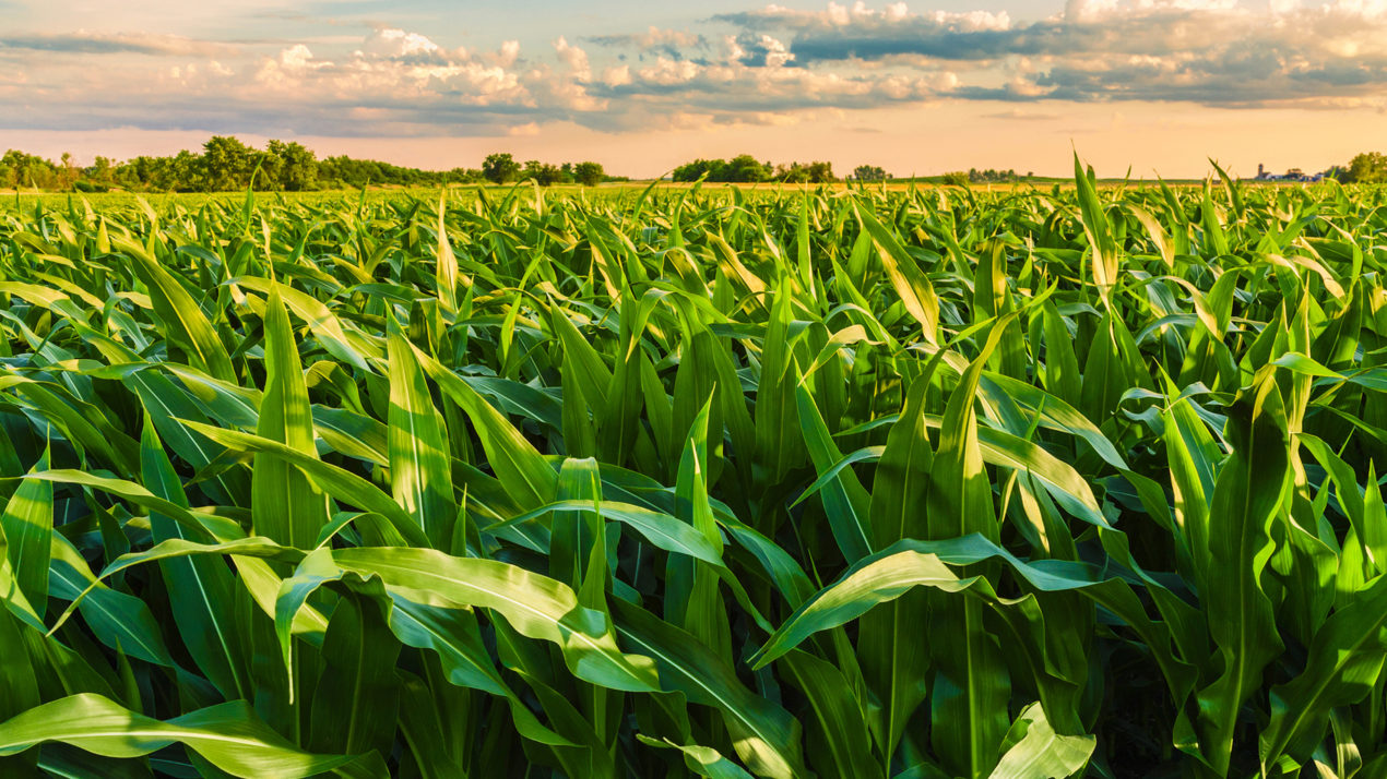 Estimated Crop Acreage Reported