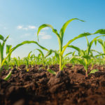 File Your Crop Acreage Reports