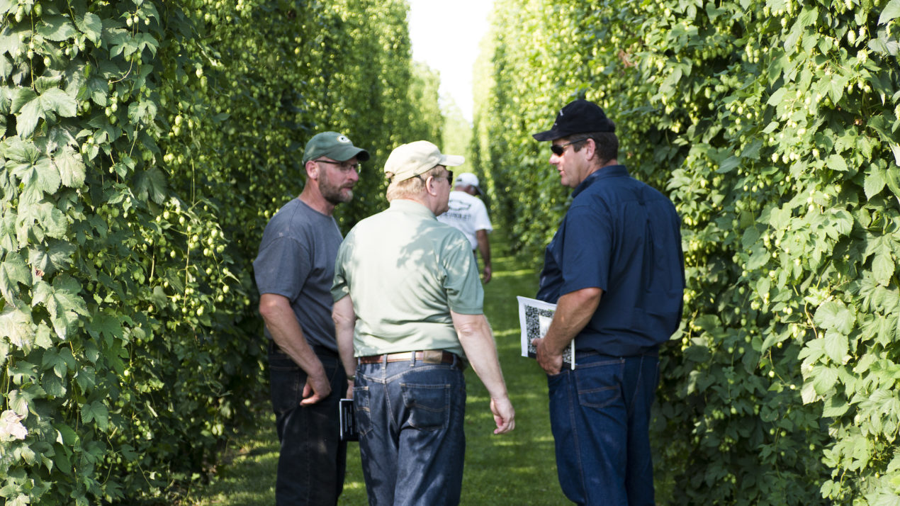 Raise A Glass To Wisconsin Hops