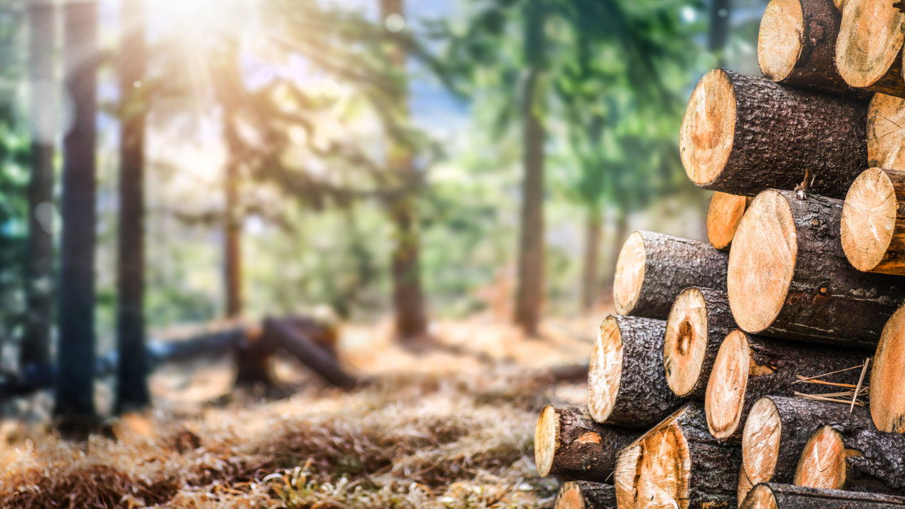 $200M Available For Timber Industry