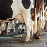 Milk Prices Lower In June