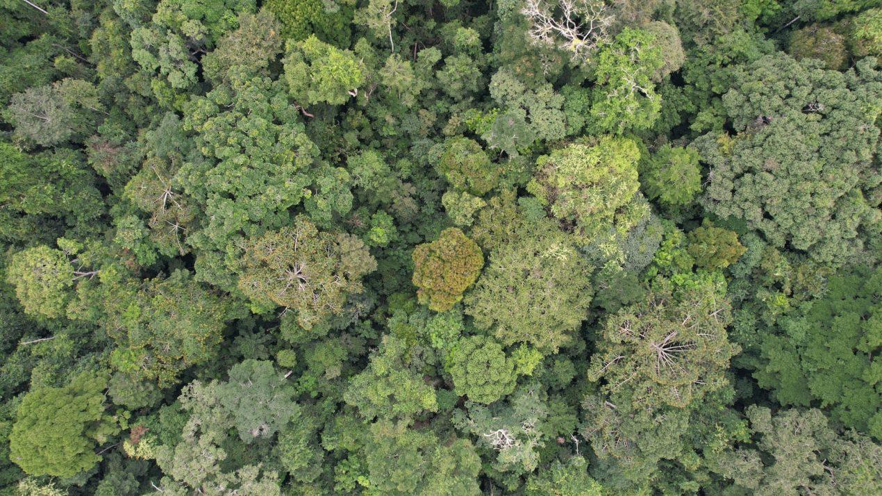 Researchers Predict Future Forest Loss