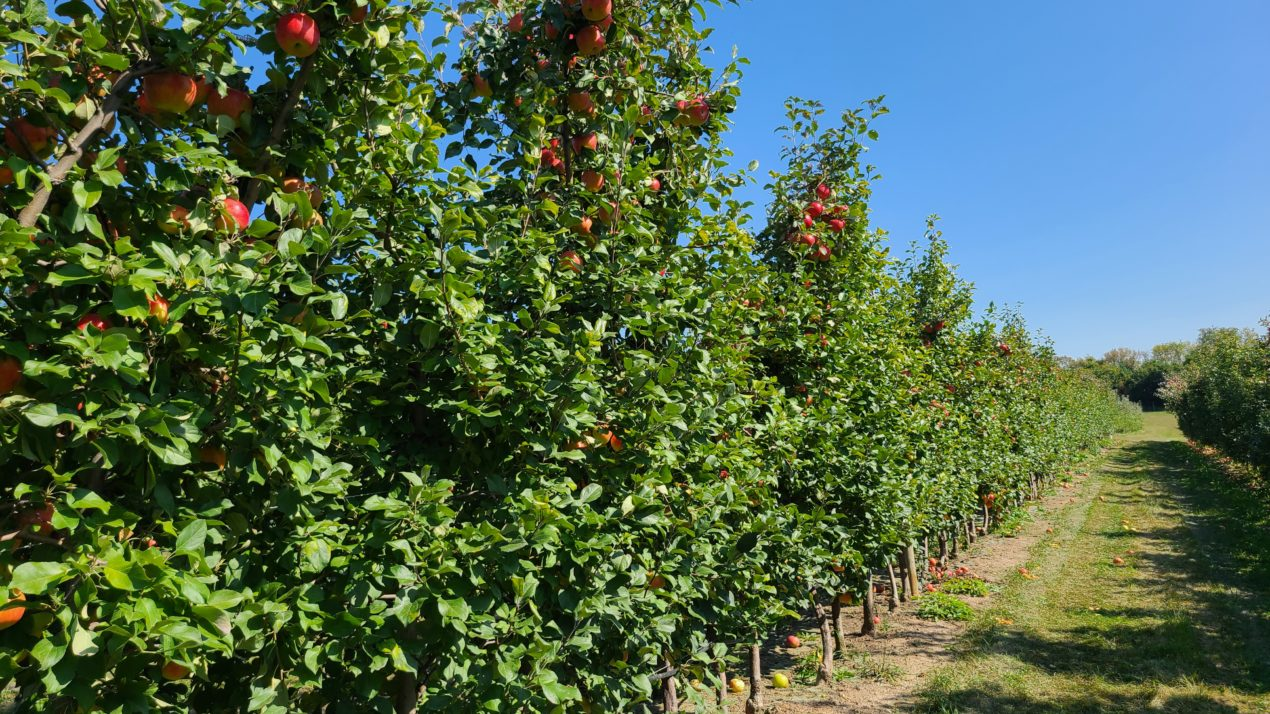 Fall Is Apple Picking Season