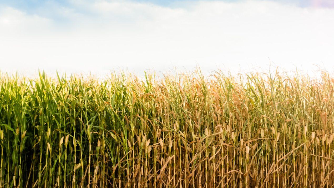 Fall Harvest Season Is Near