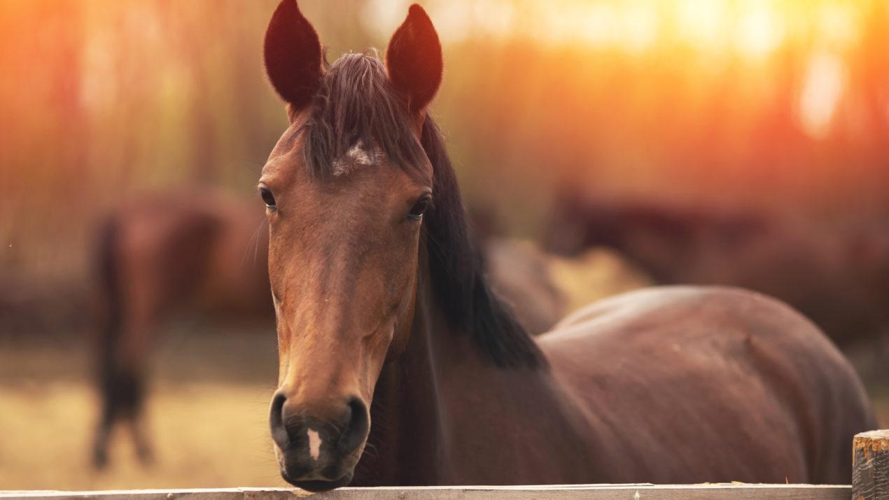Pandemic Drove Horseback Riding