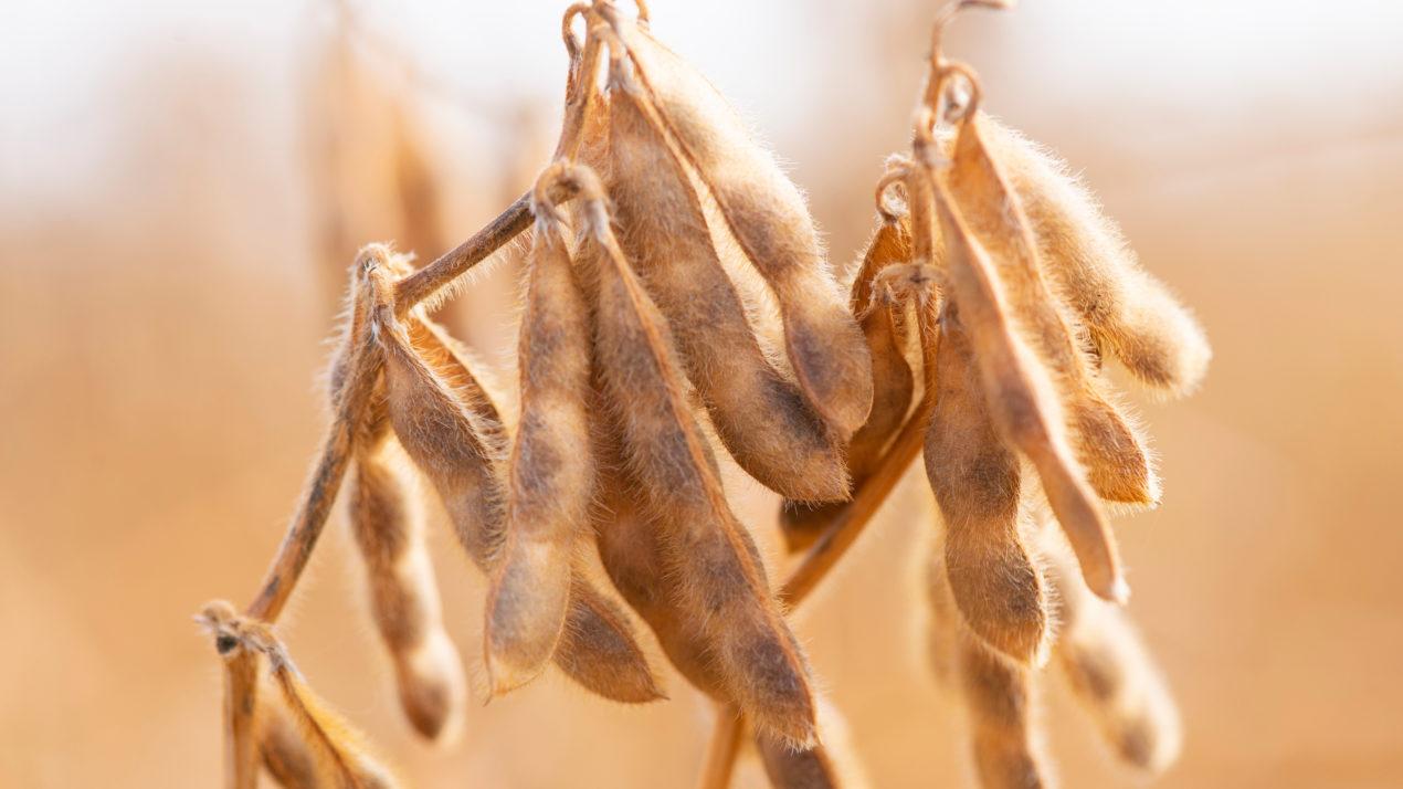 New Crop Yield Estimates Released