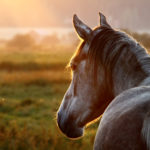 Horse Tests Positive For West Nile