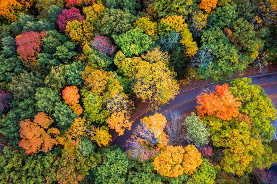 Plan An Outdoor Fall Color Adventure